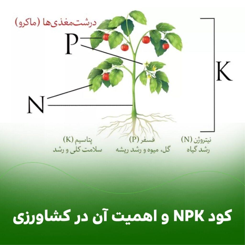 کود NPK و اهمیت آن در کشاورزی: