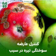 کنترل عارضه سوختگی تیره در سیب