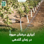 آبیاری درختان میوه در زمان گلدهی